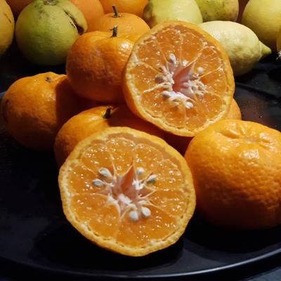 Ekologiczne owoce mandarynki 1 kg