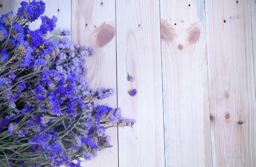 Lawenda  w leczeniu i zapobieganiu zmianom trądzikowym